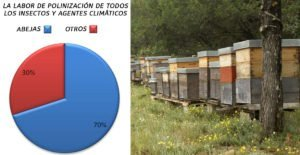 ¿Que pasaria si se mueren todas las abejas? Einstein: un desastre global