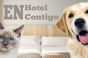 Los Hoteles que aceptan perros y mascotas en San Sebastián